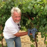 Dolcetto grape bunch